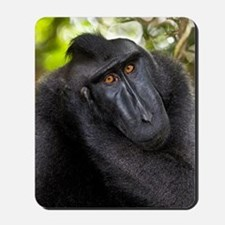 Crested black macaque Mousepad