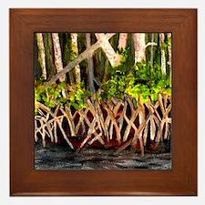 Mangroves Framed Tile