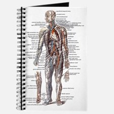 Anatomy of the Human Body Journal