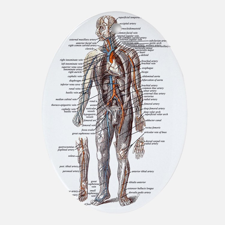 Anatomy of the Human Body Oval Ornament