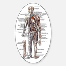 Anatomy of the Human Body Decal