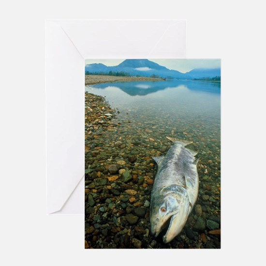 A dead chinook salmon seen shortly a Greeting Card