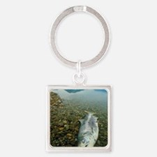 A dead chinook salmon seen shortly Square Keychain