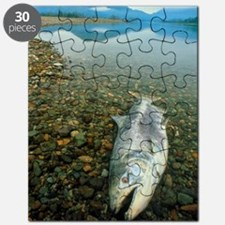 A dead chinook salmon seen shortly after sp Puzzle