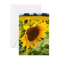 Side Sunflower Greeting Card