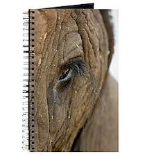 African elephant's eye Journal