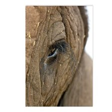 African elephant's eye Postcards (Package of 8)