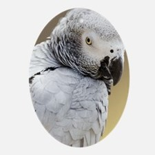 African grey parrot Oval Ornament