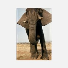 African elephant Rectangle Magnet