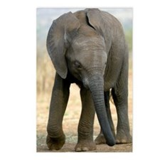 African elephant Postcards (Package of 8)