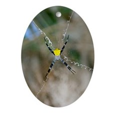 Argiope spider Oval Ornament