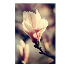 Magnolia blossom Postcards (Package of 8)