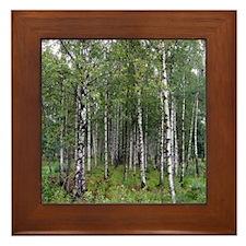 Birches Framed Tile