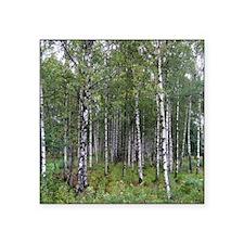 """Birches Square Sticker 3"""" x 3"""""""