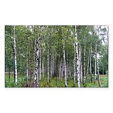 Birches Decal