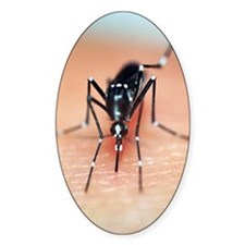 Asian tiger mosquito Decal