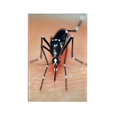 Asian tiger mosquito Rectangle Magnet