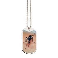 Asian tiger mosquito Dog Tags