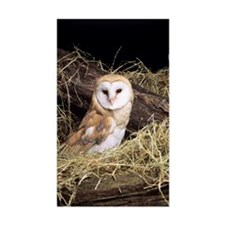 Barn owl Decal