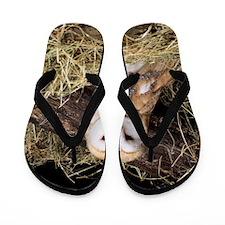Barn owl Flip Flops