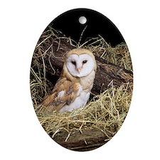 Barn owl Oval Ornament