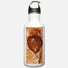 Beadlet anemone Water Bottle