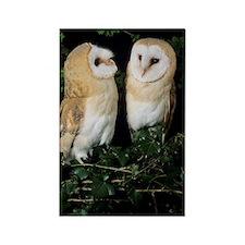 Barn owls Rectangle Magnet