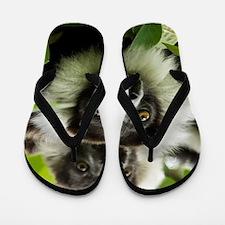 Black and white ruffed lemurs Flip Flops