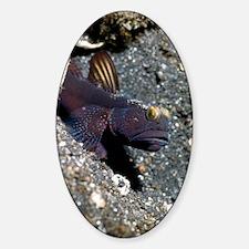Black shrimp goby Sticker (Oval)