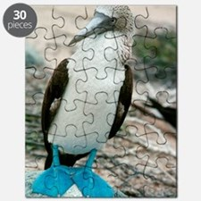 Blue-footed booby Puzzle