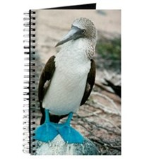 Blue-footed booby Journal