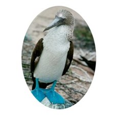 Blue-footed booby Oval Ornament