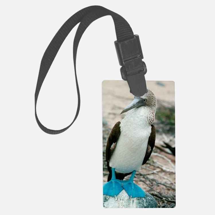 Blue-footed booby Luggage Tag