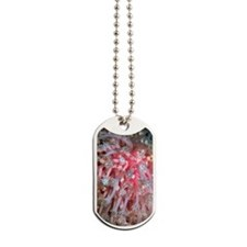 Bleached soft coral Dog Tags