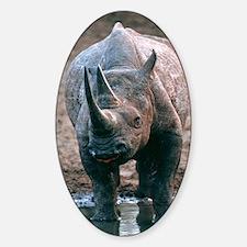 Black rhinoceros drinking Sticker (Oval)