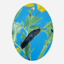 Black slug Oval Ornament