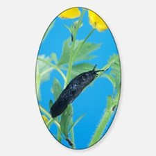 Black slug Decal