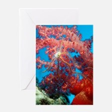 Brittle star on a soft coral Greeting Card