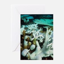 Bleached coral Greeting Card