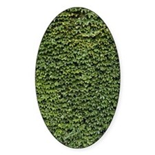 Ivy on a Wall Decal