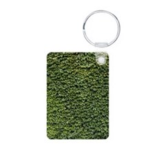 Ivy on a Wall Keychains