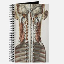 Brain and spinal cord, 1844 artwork Journal