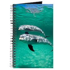 Bottlenose dolphins Journal
