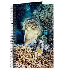 Broadclub cuttlefish about to lay eggs Journal