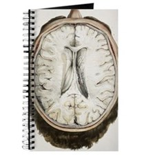 Brain ventricles, 1844 artwork Journal