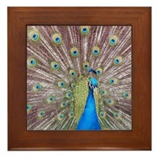 Pavo Real Peacock Framed Tile