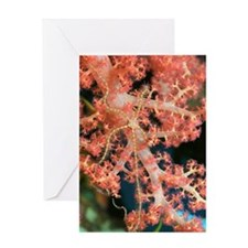 Brittlestar on coral Greeting Card