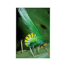 Bush cricket threat display Rectangle Magnet