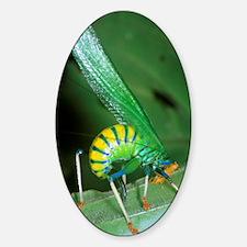 Bush cricket threat display Sticker (Oval)