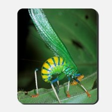 Bush cricket threat display Mousepad